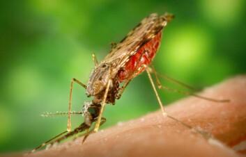 Anopheles albimanus er en av myggartene som kan spre malaria. (Foto: Wikimedia Commons)