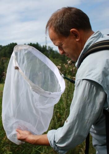 Entomolog Geir Søli er ikke fornøyd med dagens insektfangst. (Foto: Ida Korneliussen)