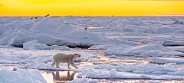 – Sommerisen i Polhavet vil forsvinne