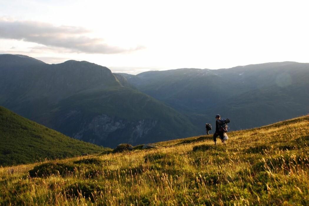 HEIM FRÅ FELT: Forskarane er ferdige i felt på Gudmedalen, og går heim for kvelden. Gudmedalen i Flåm er ein av dei alpine lokalitetane som vart undersøkte, og er den nest våtaste.