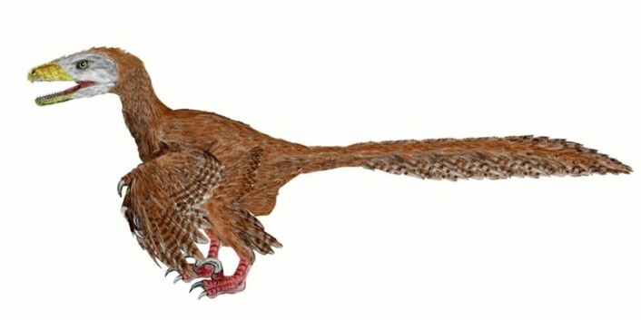 Dinosauren Deinonychus antirrhopus – «fryktelige klo» – hadde fjær. Men kan vi i dag, 110 millioner år senere, si hvilken farge fjærene hadde? Det blir nå diskutert. (Foto: (Illustrasjon: Nobu Tamura, Wikimedia Commons))