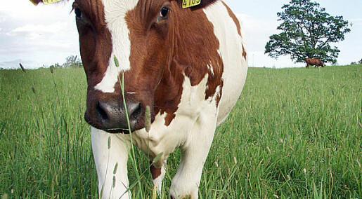 Effektivt jordbruk med litt kjøtt