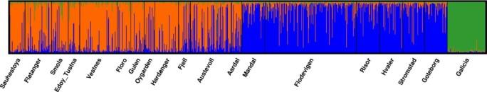 Når forskarane plottar dei genetiske markørane til dei 1025 berggyltene, klumpar dei seg saman etter likskap.  Majoriteten av dei nordlege fiskane er éi gruppe (oransje) medan dei sørlege er i ei anna (blå). Dei spanske fiskane skil seg endå meir frå resten i grøn.