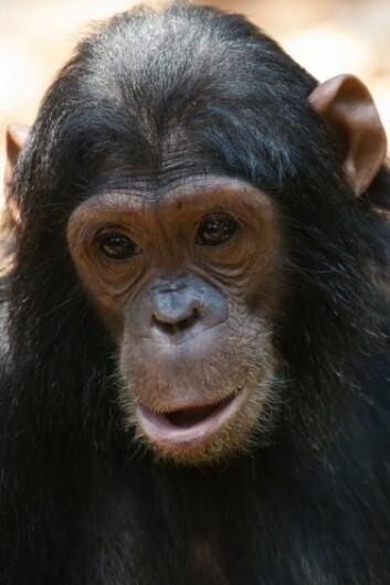Smilet er en instinktiv fryktgrimase. I naturen er den kjent fra andre primater, blant annet sjimpanser. (Foto: Colourbox)