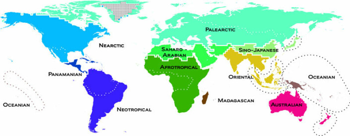 Dyras nye verdenskart deler verden in 11 regioner basert på hvilke dyrearter man kan finne der. (Foto: (Illustrasjon gjengitt med tillatelse fra Science/AAAS))