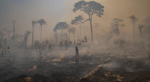 Brannene i Amazonas nær nivået i 2019