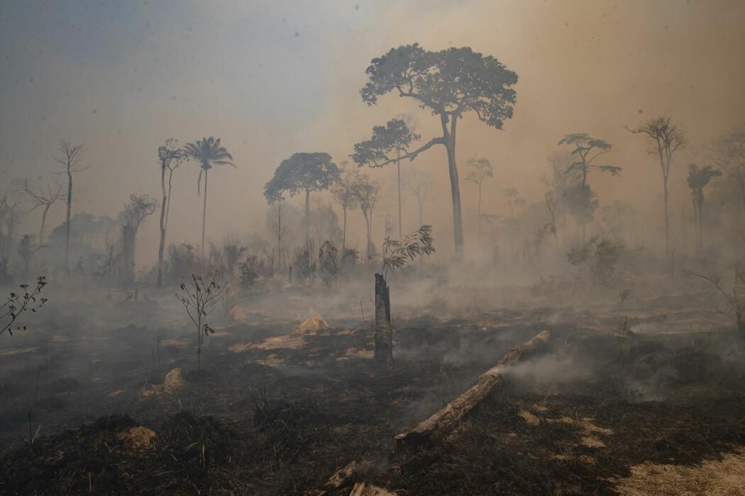 Et utbrent skogsområde i nærheten av Novo Progresso i den brasilianske delstaten Para i siste halvdel av august. Kvegbønder skal ha stått bak avskogingen i dette området.