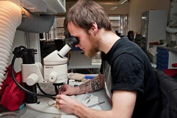 Den russiske gjesteforskeren Mikhail Zhemchuzhnikov setter fargestoff i spesifikke områder av nattsvermerhjernen for å kartlegge sentrale nervebaner. (Foto: Lena Knutli, NTNU)