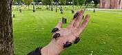 Eremitten er Norges sjeldneste bille
