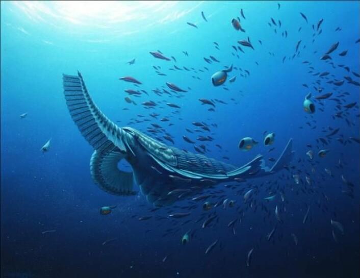 Dette er en rekonstruksjon av hvordan forskerne tror Tamisiocaris har sett ut, sammen med et utvalg av fisk som har eksistert på samme tidspunkt. Det er de lange armene foran som først hadde pigger, og som senere ble utstyrt med små børster som kunne fange opp plankton. (Foto: (Illustrasjon: Robert Nicholls))