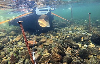 Facial recognition of fish is just one way artificial intelligence is used in marine research