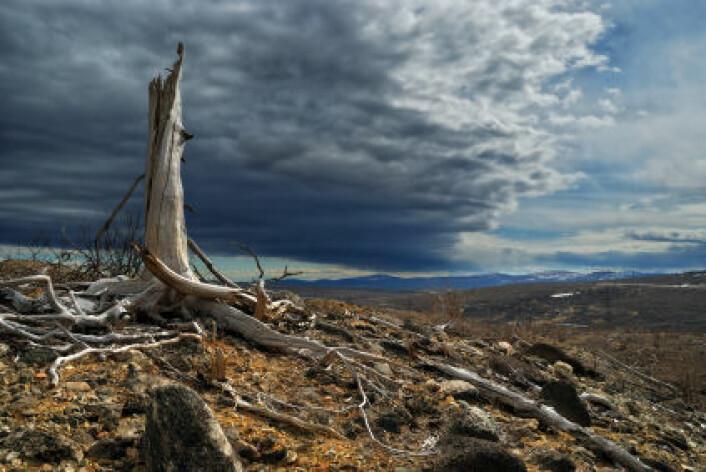 I den nye studien legges det fram betydelig lavere anslag for CO2-utslipp som følge av avskoging. (Foto: iStockphoto)