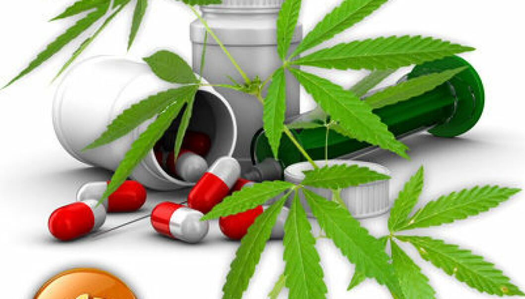 Hasj og legemidler