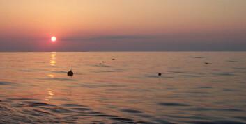 """"""" RAPID-prosjektet: bøyer over måleinstrumentene i havet mellom Afrika og Bahamas.(Foto: Stuart Cunningham and Torsten Kanzow)."""""""