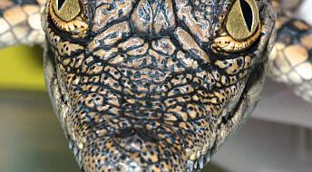 Krokodillesmilet sprekker