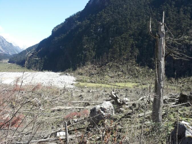 Biletet syner øydeleggingane av skogen etter fjellskredet i Yumthang.