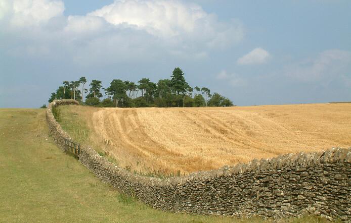Bredon Hill i Worcestershire, Storbritannia, er en liten forhøyning i terrenget med forskjellige jordtyper nedover. Her tok Kamilla Skaalsveen jevnlige prøver på to nabogårder med henholdsvis konvensjonell drift og direktesåingssystem.