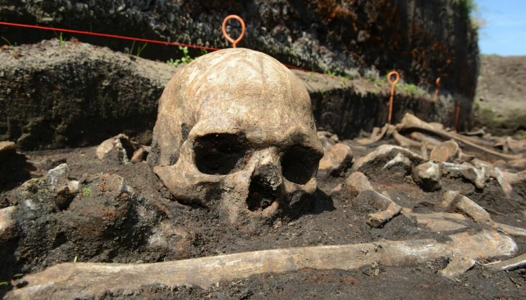 Skallen tilhører en av de falne i et kjempeslag i Tollensedalen for 3200 år siden. Nå kan de gamle krigerne kaste lys over melketoleranse i den europeiske befolkningen.