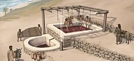 Her ble det tråkket vindruer for nesten 3000 år siden