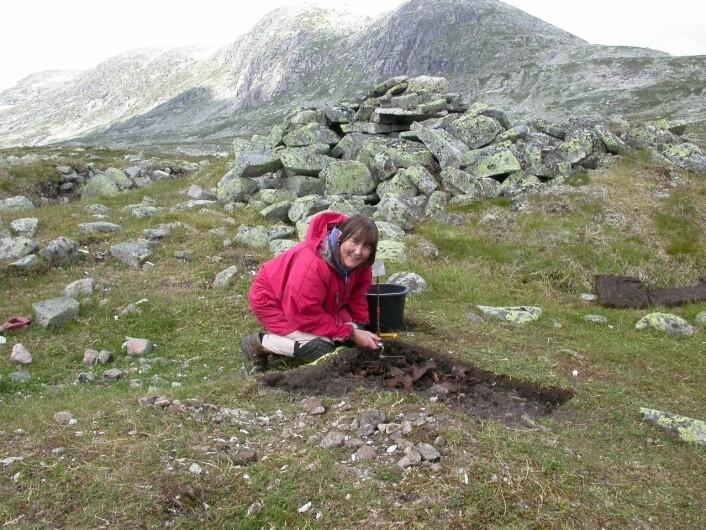 Osteologen Anne Karin Hufthammer, som har analysert beinmaterialet, graver i avfalldyngen på Sumtangen. (Foto: S. Indrelid, Universitetsmuseet i Bergen)