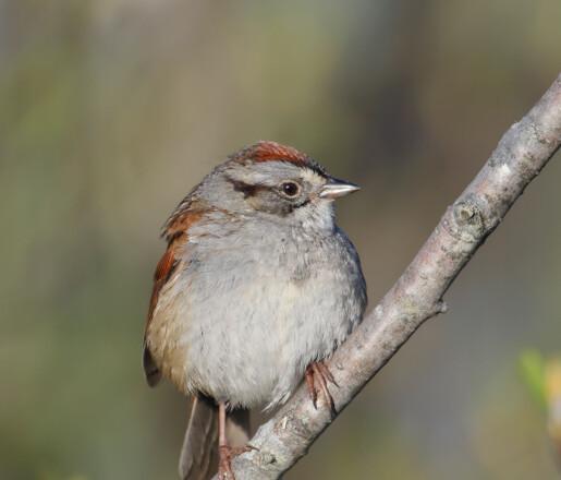 Fugler må også varme opp stemmen for å synge bra