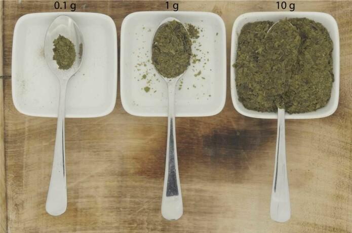 Det første bildet viser 0,1 gram med sukkertare, det utgjør omtrent daglig maksbehov for jod. Om du deler det på fire igjen, får du en anbefalt dagsdose med jod.