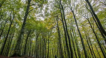 Trær som vokser fort har kortere levetid, det kan gjøre at skogen lagrer mindre karbon