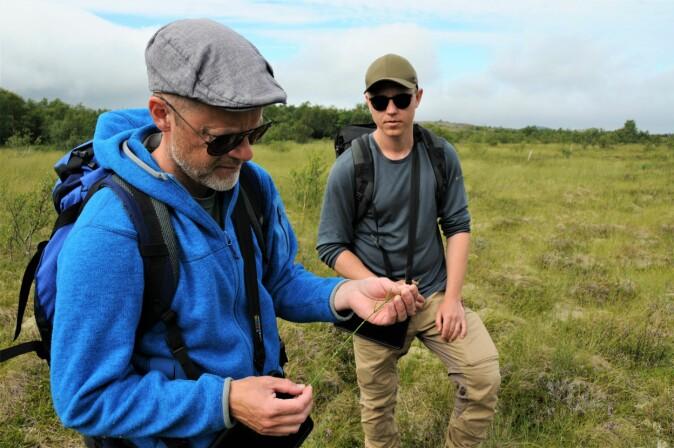 Myrsnelle indikerer jordvannsmyr.