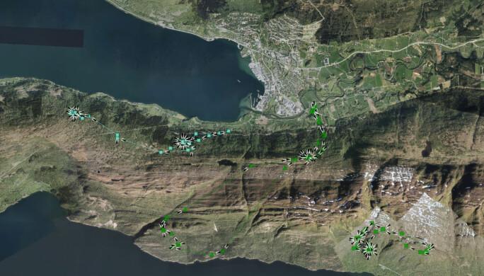 Her er bevegelsene til tre hjorter nær Nordfjordeid, en helg september.