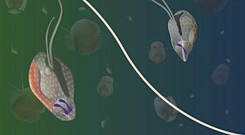 Disse bitte små algene kan klare både aseksuell og seksuell formering