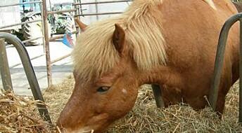 Hestens favorittfôr utsatt for muggsopp