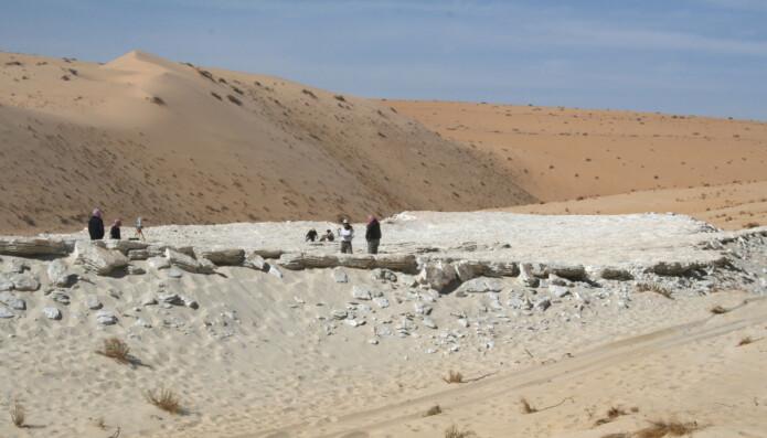 Her undersøker forskerne den gamle innsjøbunnen blant sanddynene i Nefud.