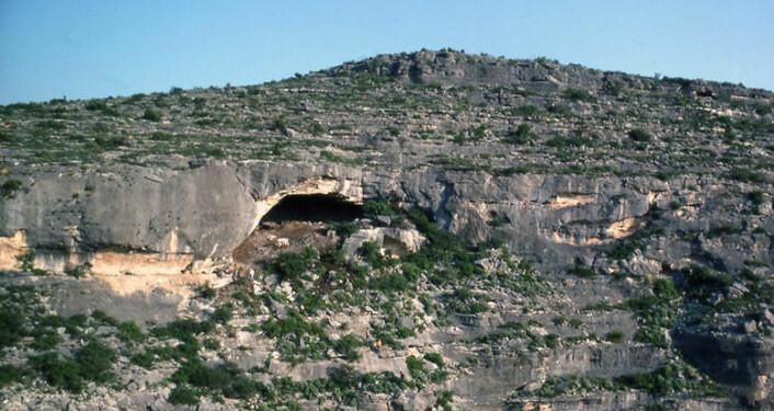 Hinds Cave i Texas er ett av stedene hvor det er funnet forsteinet avføring, koprolitter. Koprolittene i den nye studien er rundt 8000 år gamle. (Foto: University of Texas at Austin)