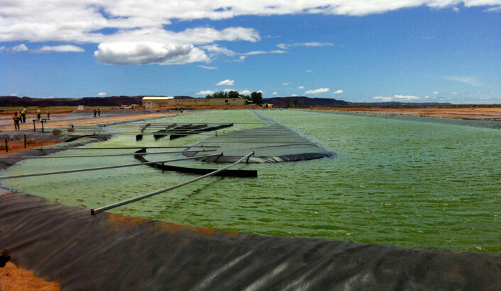 Fra algefarmen til firmaet Aurora algae i Karratha, Australia. (Foto: Aurora Algae)