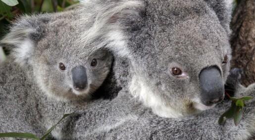 Går pengene til truede arter faktisk til bevaring?