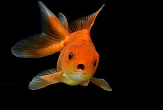 Fisk har også mange følelser