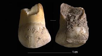 Denne melketannen satt i en neandertaler-munn for 48 000 år siden
