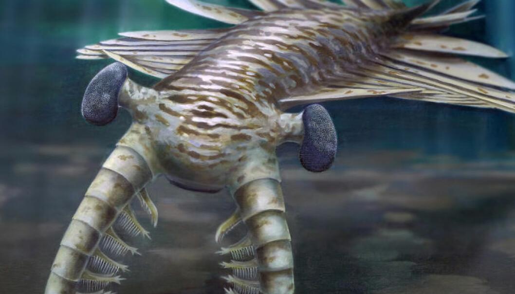 En rekonstruksjon av det skrekkelige superrovdyret Anomalocaris.