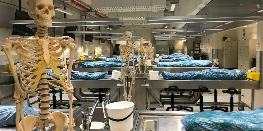 Det er vanskelig å forestille seg at disse kroppene har vært levende en gang.