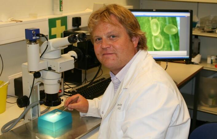 Forsker Paul Grini tar ut frøene fra belgen til vårskrinneblom. Frøene kan ses på skjermen i bakgrunnen. (Foto: Norunn K. Torheim)