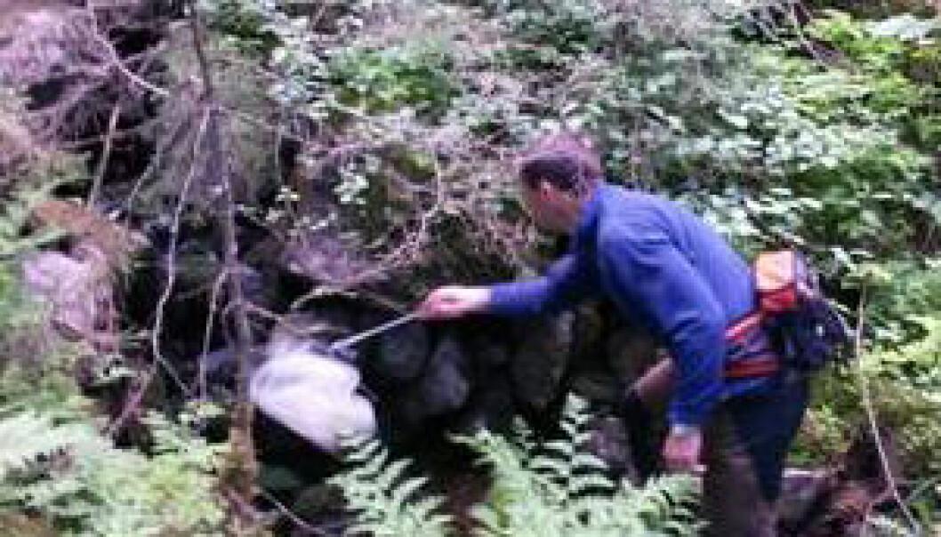 Forskere henger i trærne i sommer