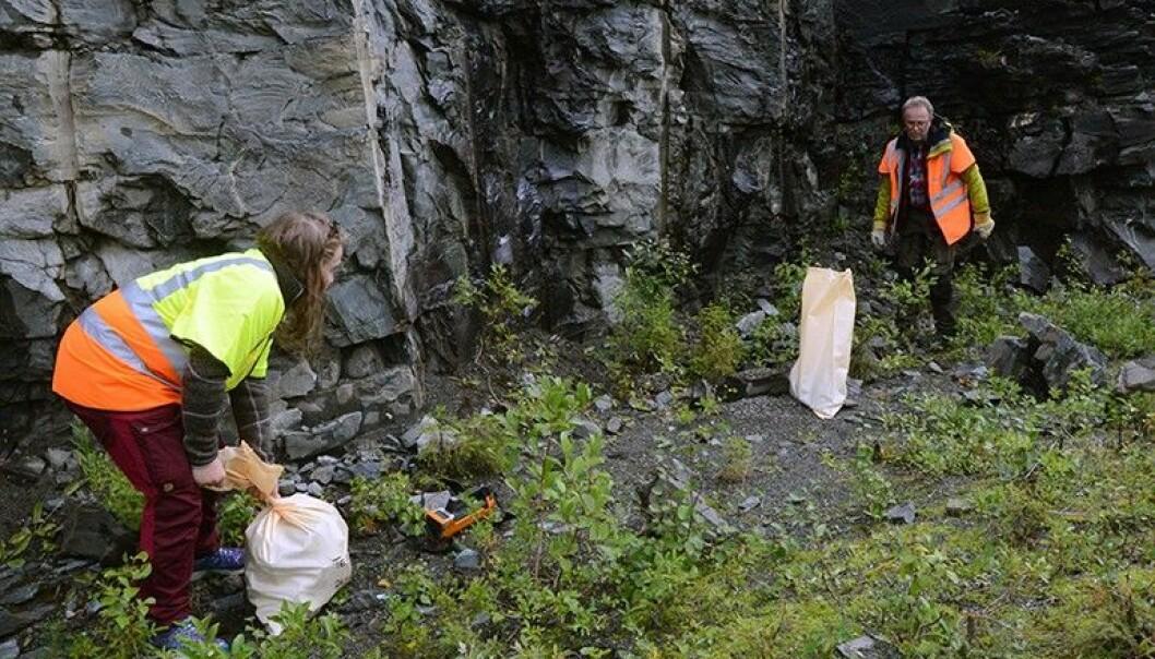 NGU-forskarane Anette Granseth og Eyolf Erichsen tar steinprøver frå ei vegskjering i Teveldalen i Meråker.