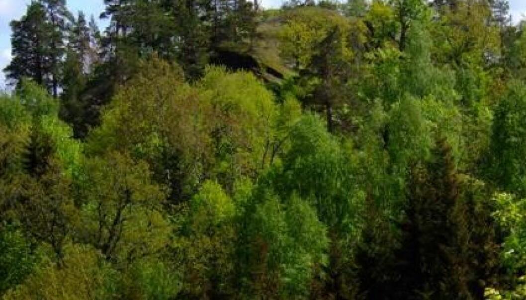 Lett å verne løvskog