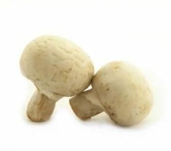 Den vanlige sjampinjongen heter Agaricus bisporus på latin. Den var opprinnelig lysebrun, men i 1926 fant en bonde hvite sjampinjong som han begynte å dyrke. Sjampinjonger har kanskje en positiv virkning på immunforsvaret. (Foto: Colourbox)