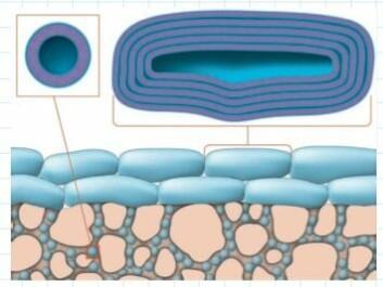 Figuren er en skjematisk framstilling av membranet i PVPA-modellen. Det rosa arealet er filteret, mens det blå representerer både de små liposomene som har trengt ned i porene i filteret, og de større liposomene på toppen av filteret. (Foto: (Illustrasjon: Roy Andre Lyså))