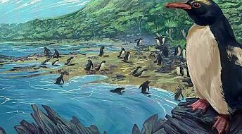 Pingviner kom fra det tapte kontinentet Zealandia, ifølge ny studie
