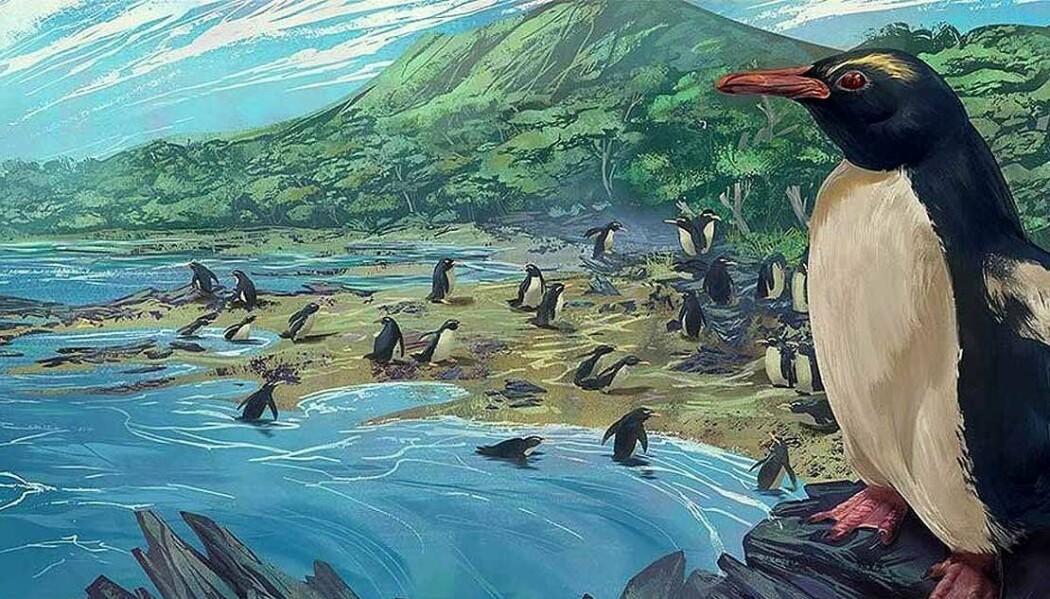I en ny studie beskriver forskere en utdødd pingvinart og har gjort en analyse av hvor det er mest sannsynlig at pingviner oppstod.