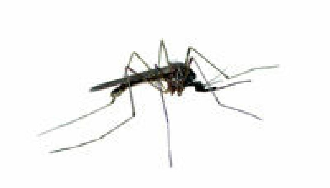 Hvorfor klør myggestikk?