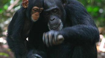 Folk brukte apeverktøy