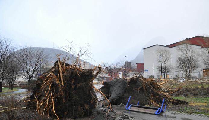 Ekstremværet Dagmar veltet trær både i skogen og i bebygde strøk i 2011. Som her i Årdal på Vestlandet.